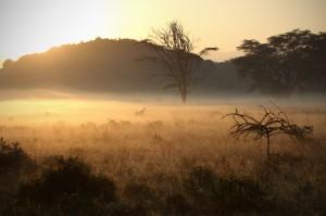Wildlife - Fotosafari in Afrika - Lake Nakuru