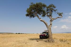 Wildlife - Fotosafari in Afrika - Masai Mara 1