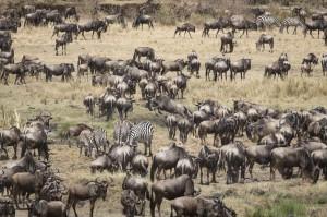 Wildlife - Fotosafari in Afrika - Masai Mara 2