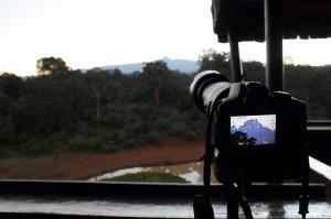 Wildlife - Fotosafari in Afrika - Mount Kenya